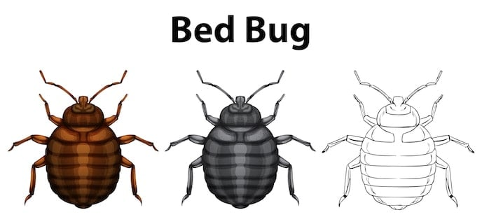 home remedies to get rid of bed bugs permanently