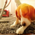 Best carpet Cleaner for Pet hair