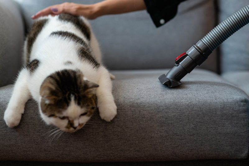 pet hair clog vacuum